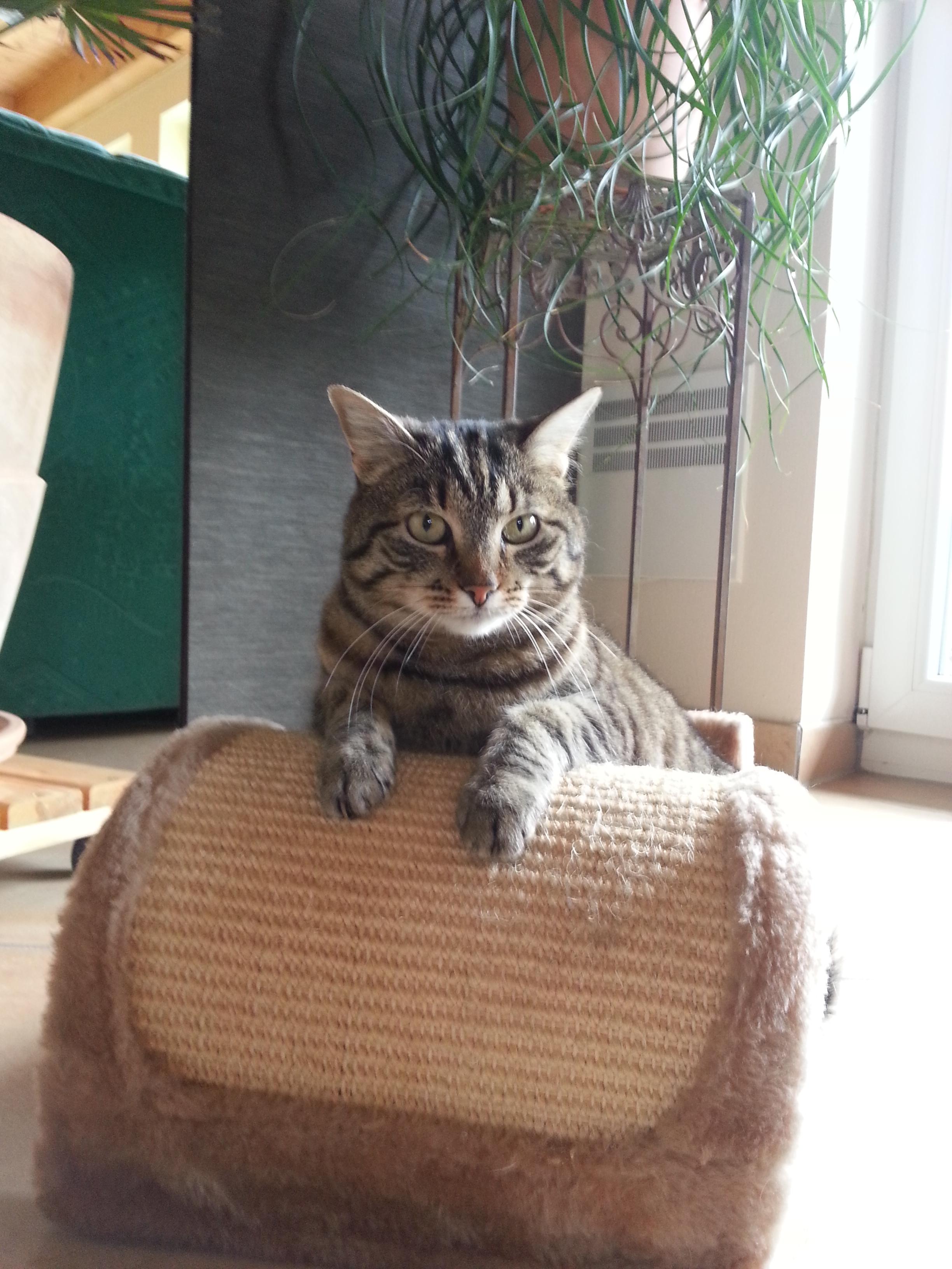 Eine Süsse Katze :-)